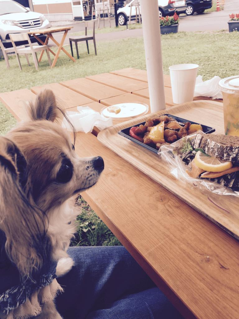 シニア犬 愛犬 時間